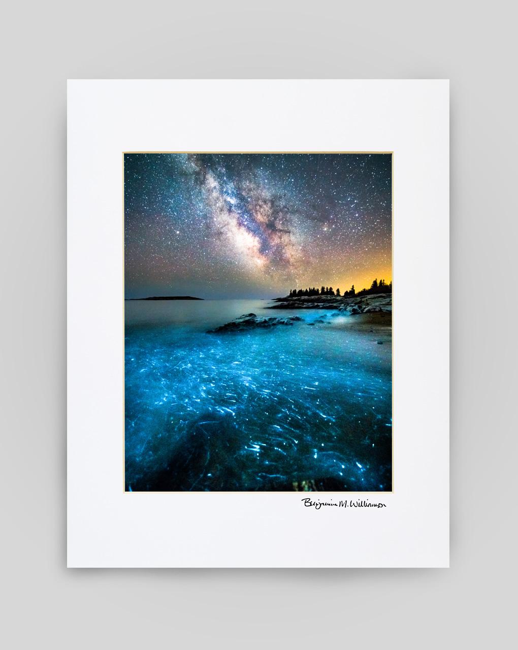 Reid St Park Bioluminescence Print