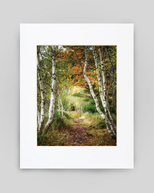 Along Hemlock Road in Acadia National Park by Susan Garver