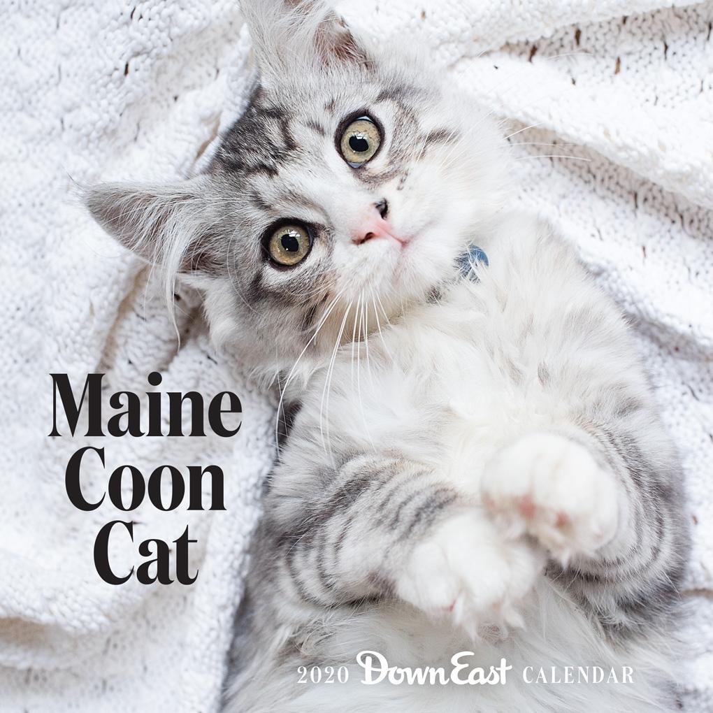 Maine Calendar 2020 2020 Maine Coon Cat Down East Wall Calendar   Down East Shop