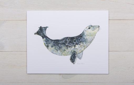 Valerie Paul - Harbor Seal Watercolor