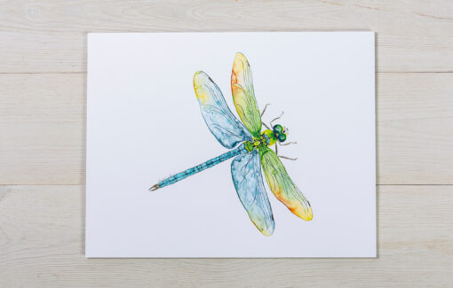 Valerie Paul - Print - Dragonfly Watercolor
